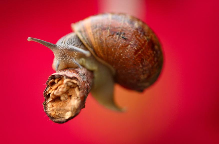 Snail by Ari Knight